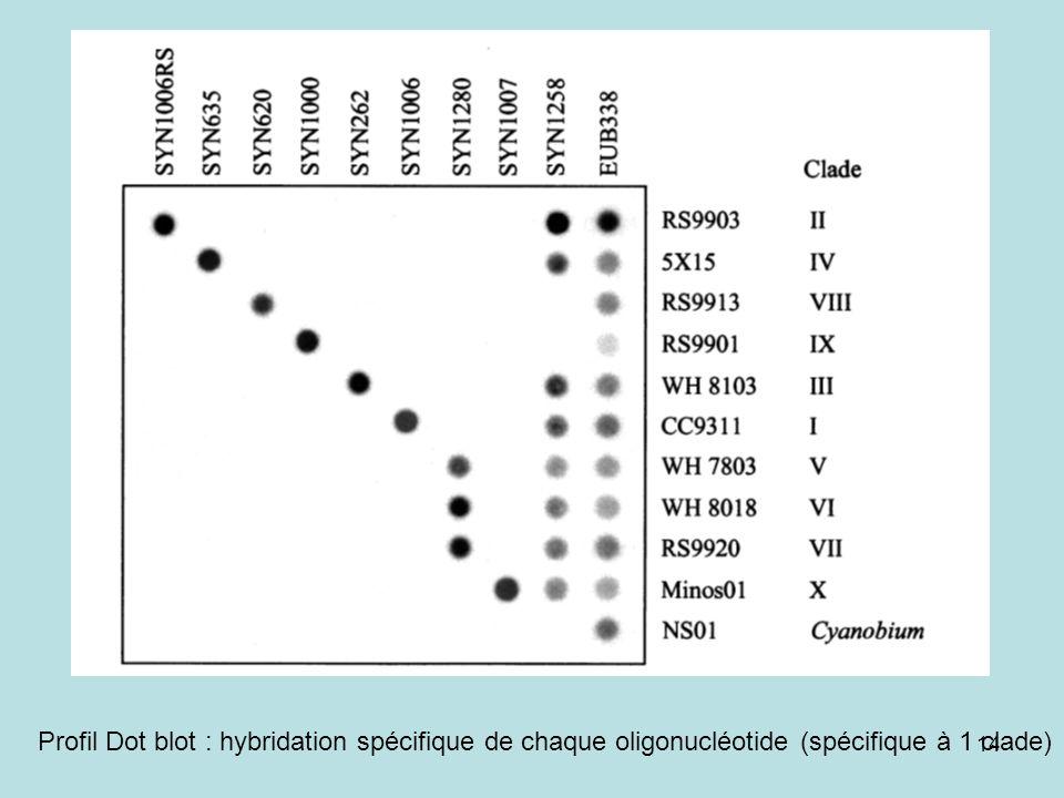 14 Profil Dot blot : hybridation spécifique de chaque oligonucléotide (spécifique à 1 clade)