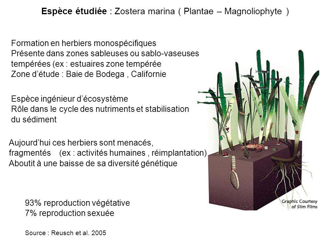 Espèce étudiée : Zostera marina ( Plantae – Magnoliophyte ) Formation en herbiers monospécifiques Présente dans zones sableuses ou sablo-vaseuses tempérées (ex : estuaires zone tempérée Zone détude : Baie de Bodega, Californie Espèce ingénieur décosystème Rôle dans le cycle des nutriments et stabilisation du sédiment Aujourdhui ces herbiers sont menacés, fragmentés (ex : activités humaines, réimplantation) Aboutit à une baisse de sa diversité génétique 93% reproduction végétative 7% reproduction sexuée Source : Reusch et al.