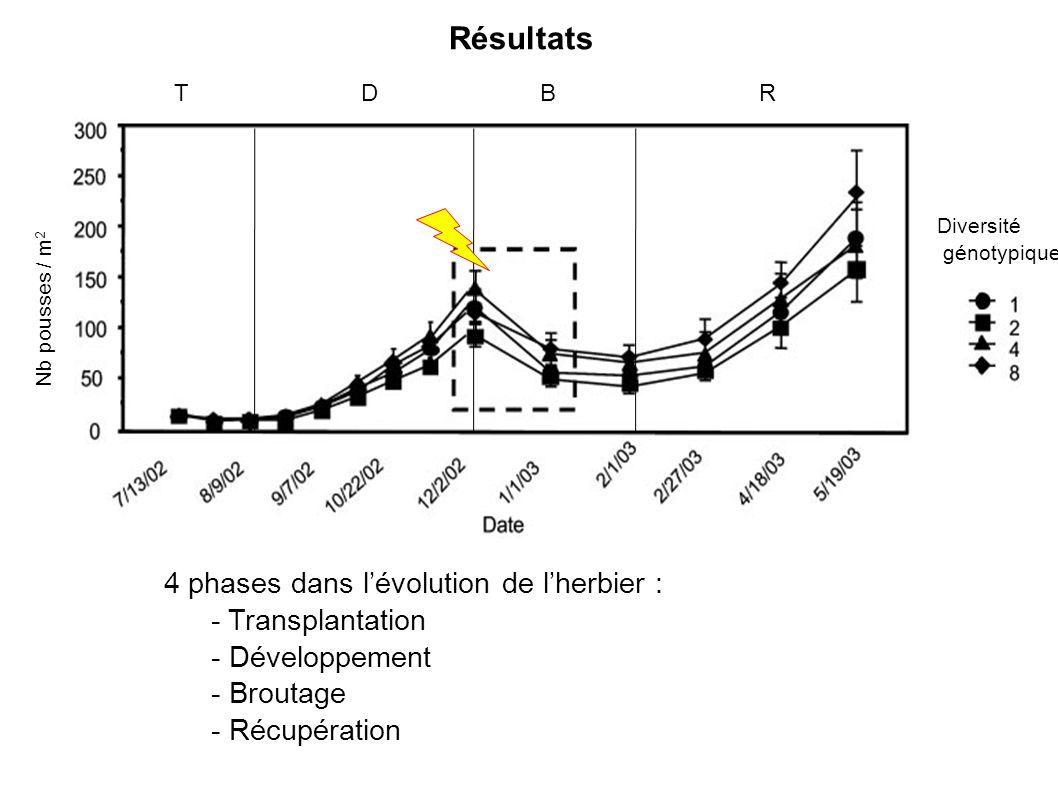 Résultats 4 phases dans lévolution de lherbier : - Transplantation - Développement - Broutage - Récupération Nb pousses / m 2 Diversité génotypique TDBR