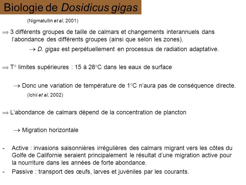 Biologie de Dosidicus gigas 3 différents groupes de taille de calmars et changements interannuels dans labondance des différents groupes (ainsi que se