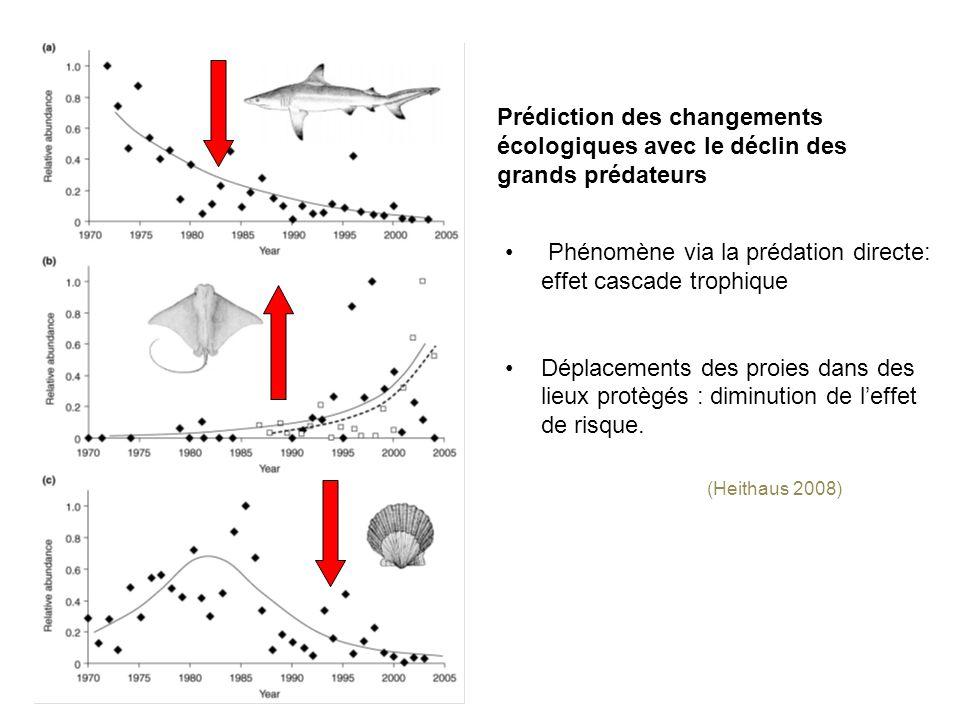 (Heithaus 2008) Phénomène via la prédation directe: effet cascade trophique Déplacements des proies dans des lieux protègés : diminution de leffet de risque.