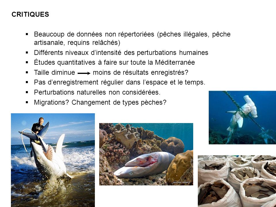 CRITIQUES Beaucoup de données non répertoriées (pêches illégales, pêche artisanale, requins relâchés) Différents niveaux dintensité des perturbations humaines Études quantitatives à faire sur toute la Méditerranée Taille diminue moins de résultats enregistrés.