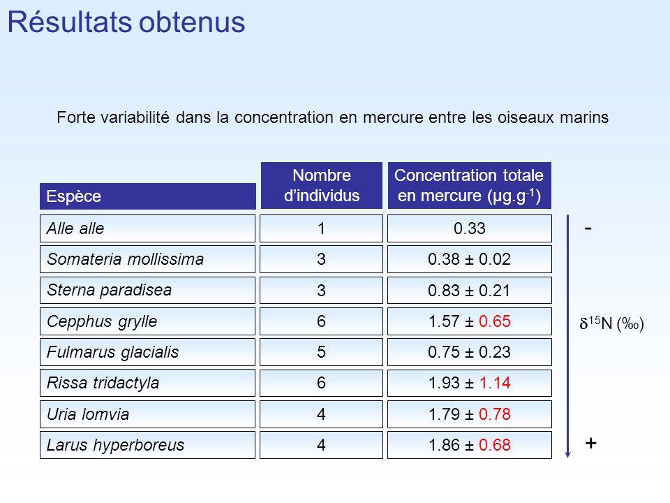 Forte variabilité dans la concentration en mercure entre les oiseaux marins 50.75 ± 0.23 61.93 ± 1.14 41.79 ± 0.78 4 1.86 ± 0.68 10.33 30.38 ± 0.02 30.83 ± 0.21 61.57 ± 0.65 Larus hyperboreus Uria lomvia Rissa tridactyla Fulmarus glacialis Cepphus grylle Sterna paradisea Somateria mollissima Alle alle Espèce Nombre dindividus Concentration totale en mercure (µg.g -1 ) Résultats obtenus 15 N () + -