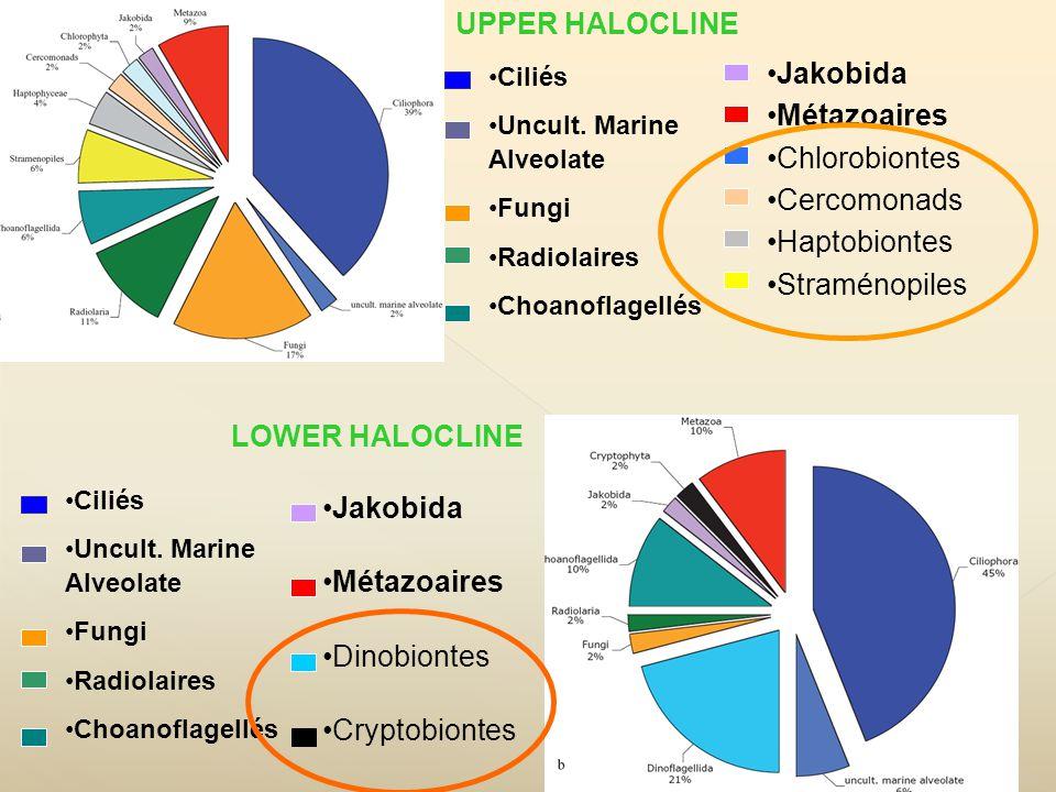 Ciliés Uncult. Marine Alveolate Fungi Radiolaires Choanoflagellés Jakobida Métazoaires Chlorobiontes Cercomonads Haptobiontes Straménopiles Ciliés Unc