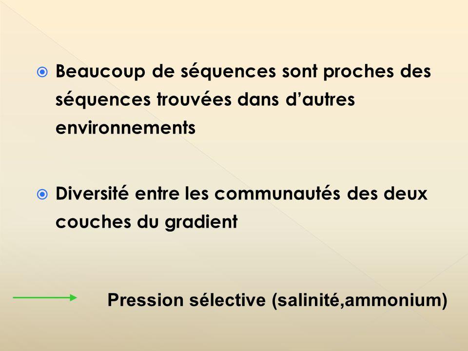 Beaucoup de séquences sont proches des séquences trouvées dans dautres environnements Diversité entre les communautés des deux couches du gradient Pre