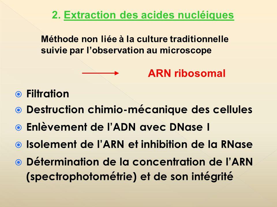 Filtration Destruction chimio-mécanique des cellules Enlèvement de lADN avec DNase I Isolement de lARN et inhibition de la RNase Détermination de la c