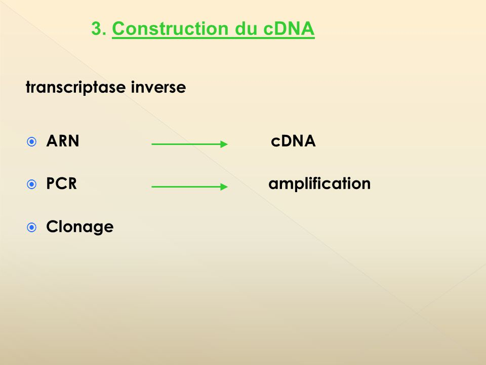 transcriptase inverse ARN cDNA PCR amplification Clonage 3. Construction du cDNA