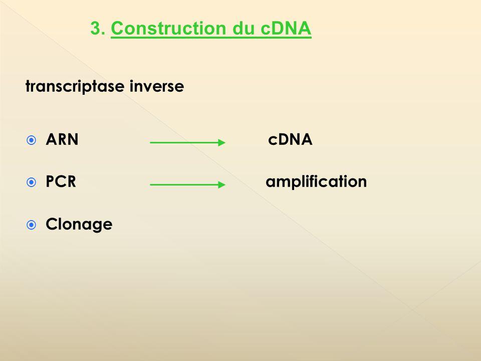 Séquences partielles regroupées en phylotypes (unités opérationnelles taxonomiques) 4.