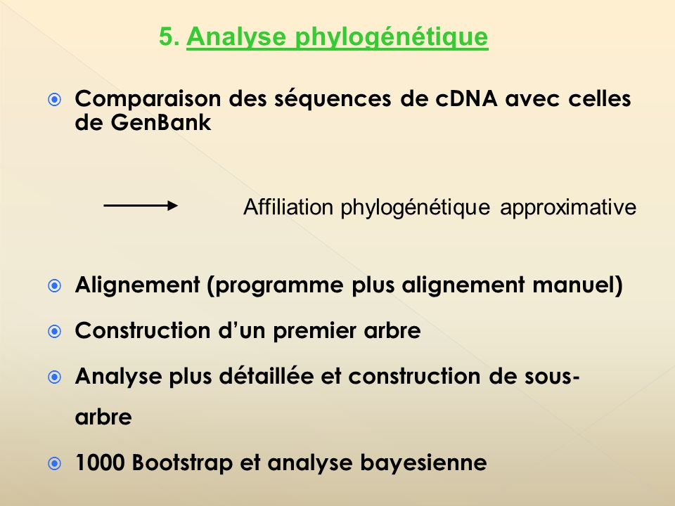 Comparaison des séquences de cDNA avec celles de GenBank Alignement (programme plus alignement manuel) Construction dun premier arbre Analyse plus détaillée et construction de sous- arbre 1000 Bootstrap et analyse bayesienne Affiliation phylogénétique approximative 5.