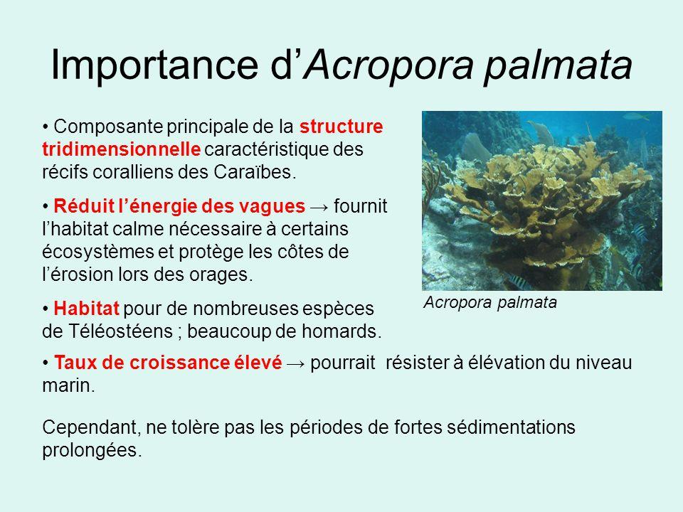 Importance dAcropora palmata Composante principale de la structure tridimensionnelle caractéristique des récifs coralliens des Caraïbes.