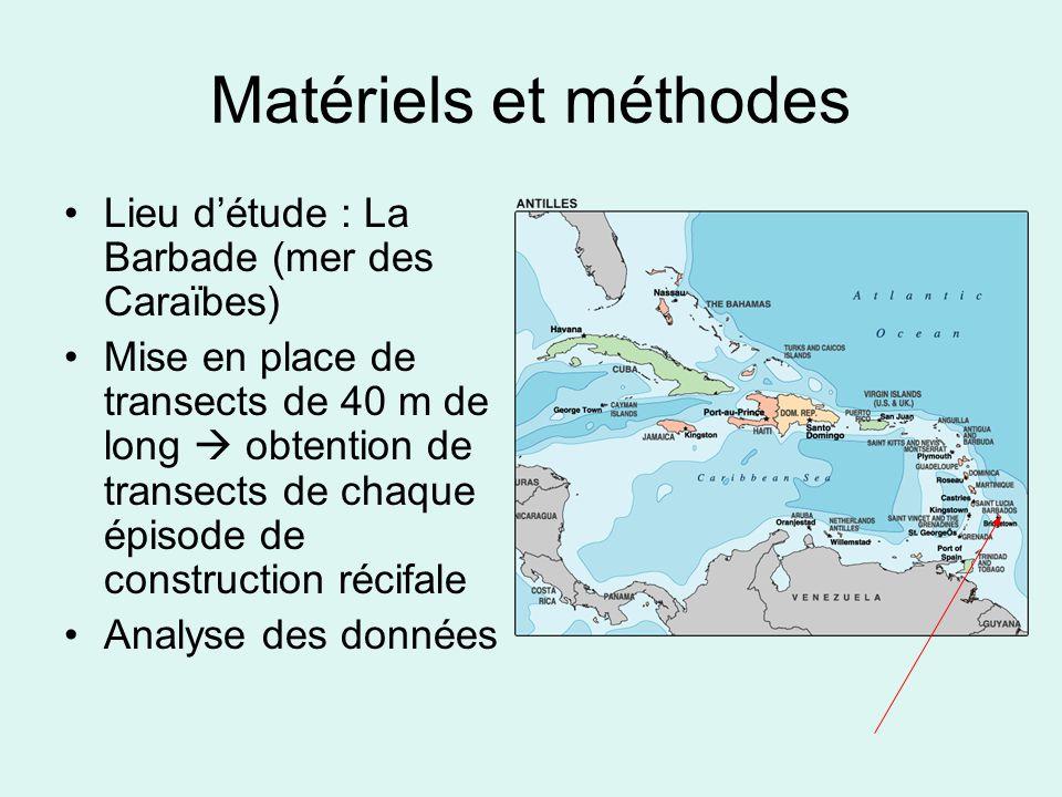 Matériels et méthodes Lieu détude : La Barbade (mer des Caraïbes) Mise en place de transects de 40 m de long obtention de transects de chaque épisode de construction récifale Analyse des données