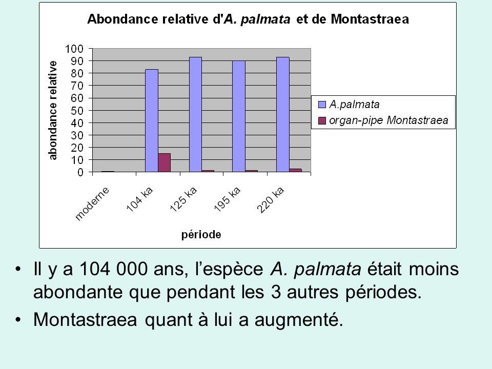 Il y a 104 000 ans, lespèce A. palmata était moins abondante que pendant les 3 autres périodes.