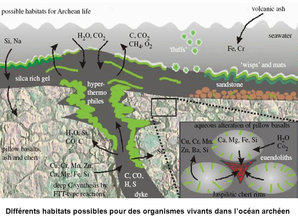 Différents habitats possibles pour des organismes vivants dans locéan archéen