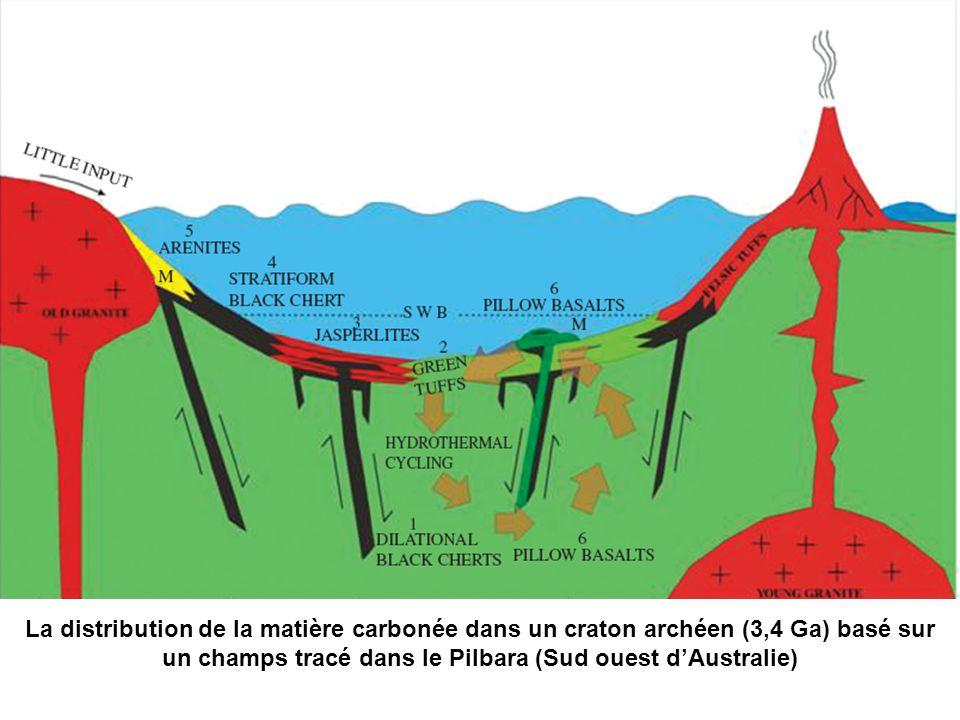 La distribution de la matière carbonée dans un craton archéen (3,4 Ga) basé sur un champs tracé dans le Pilbara (Sud ouest dAustralie)