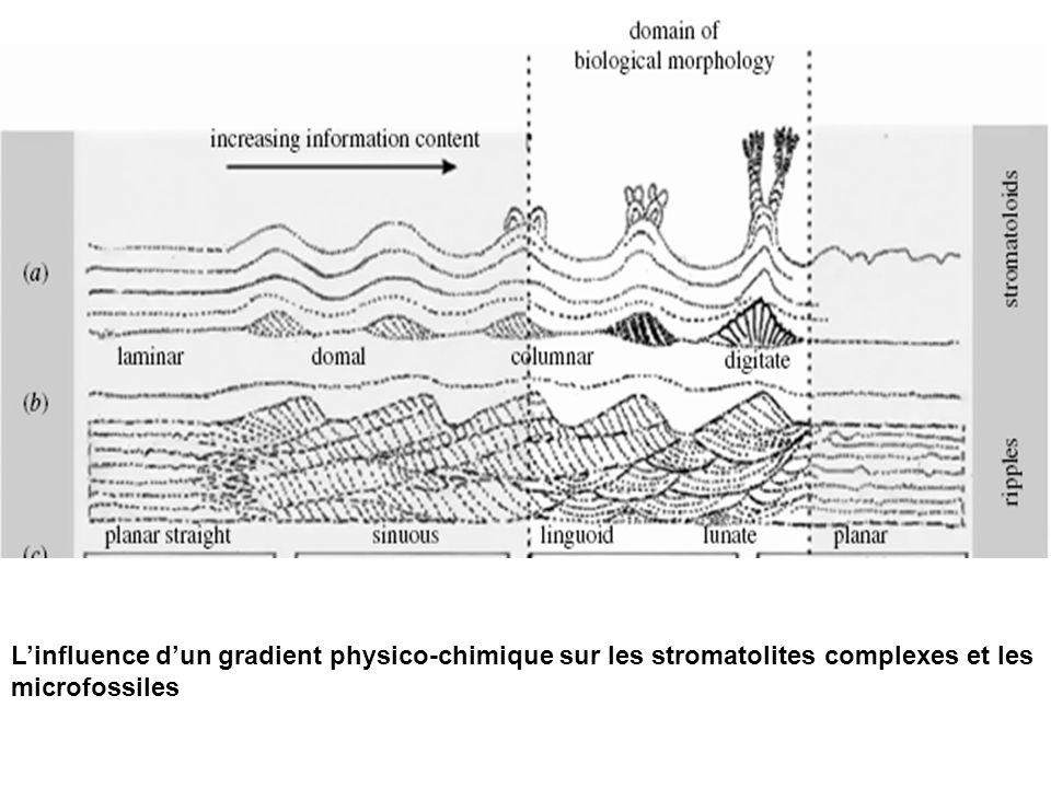 Linfluence dun gradient physico-chimique sur les stromatolites complexes et les microfossiles