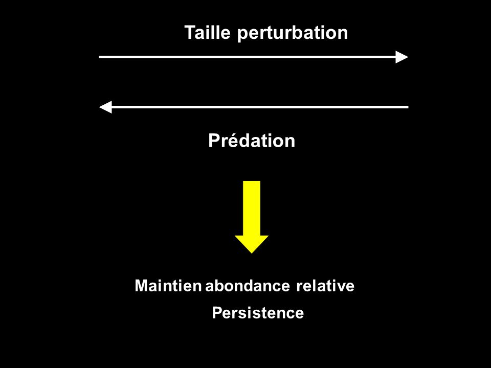 Taille perturbation Prédation Maintien abondance relative Persistence