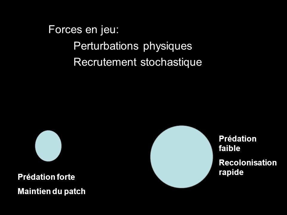 Forces en jeu: Perturbations physiques Recrutement stochastique Prédation forte Maintien du patch Prédation faible Recolonisation rapide