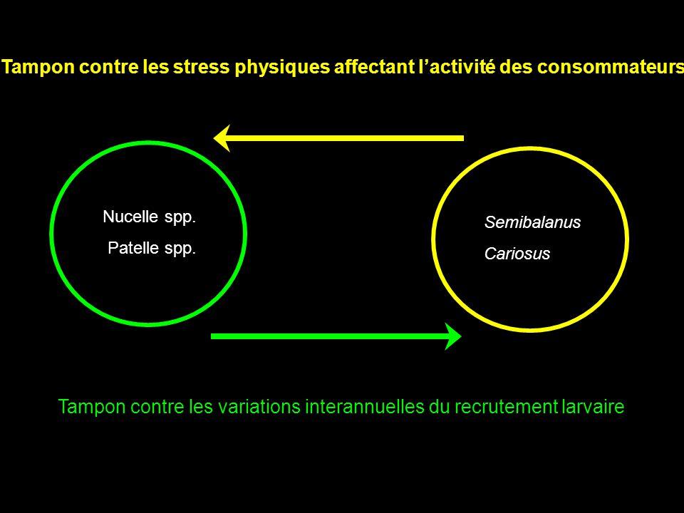 Nucelle spp.Patelle spp.