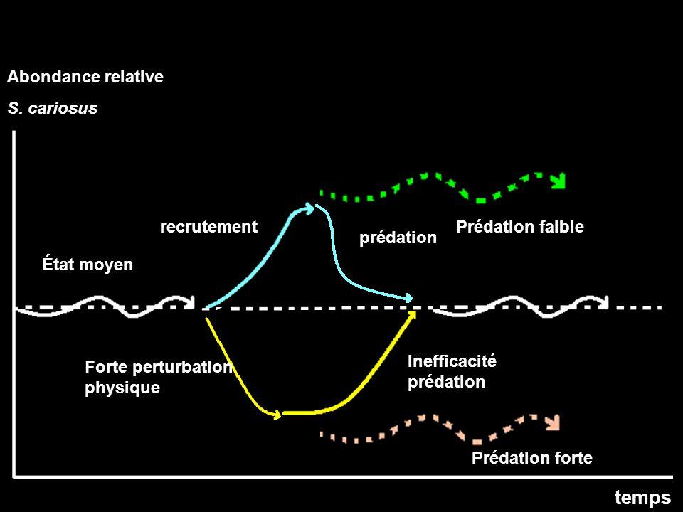 État moyen recrutement prédation Forte perturbation physique Inefficacité prédation Prédation faible Prédation forte temps Abondance relative S.