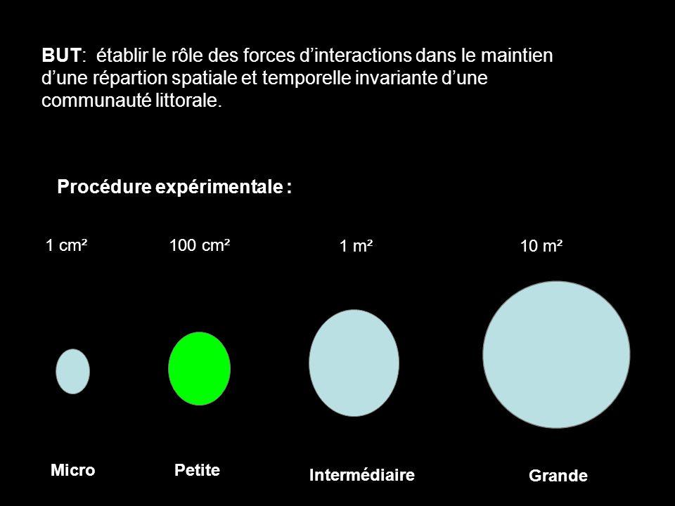 1 cm²100 cm² 1 m²10 m² MicroPetite Intermédiaire Grande BUT: établir le rôle des forces dinteractions dans le maintien dune répartion spatiale et temporelle invariante dune communauté littorale.