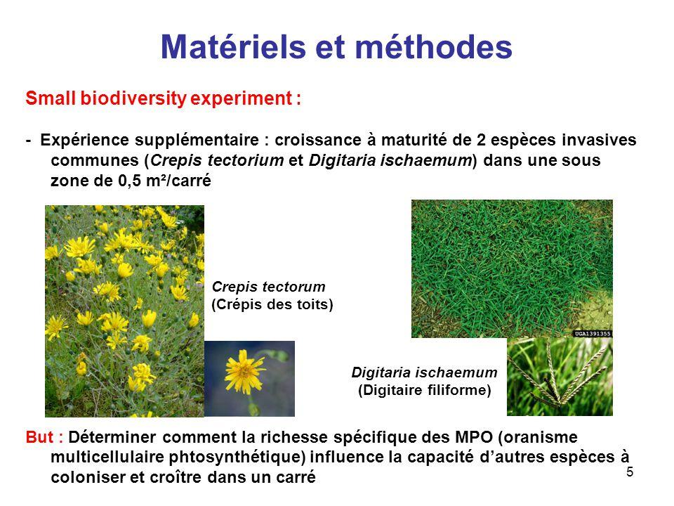 6 Matériels et méthodes Large biodiversity experiment : - 342 carrés de 13m X 13m (utilisation de 163 carrés) - Assignation au hasard dune richesse spécifique de 1, 2, 4, 8, ou 16 espèces pour chacun des carrés parmi un pool de 18 espèces (semé en 1994 et 1995) - Désherbage partiel - Détermination de la biomasse des MPOs et de leur richesse spécifique - Quantification de limportance des maladies sur à partir des quatres maladies les plus fréquentes : - Septoria liatridis sur Liatris aspera - Uromyces lespedezae-procumbentis sur Lespedeza capitata - Erzsiphe cichoracearum sur Monarda fistulosa - Colletotrichum sp.