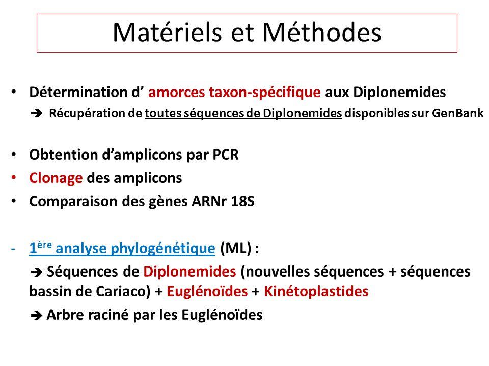 Détermination d amorces taxon-spécifique aux Diplonemides Récupération de toutes séquences de Diplonemides disponibles sur GenBank Obtention damplicon