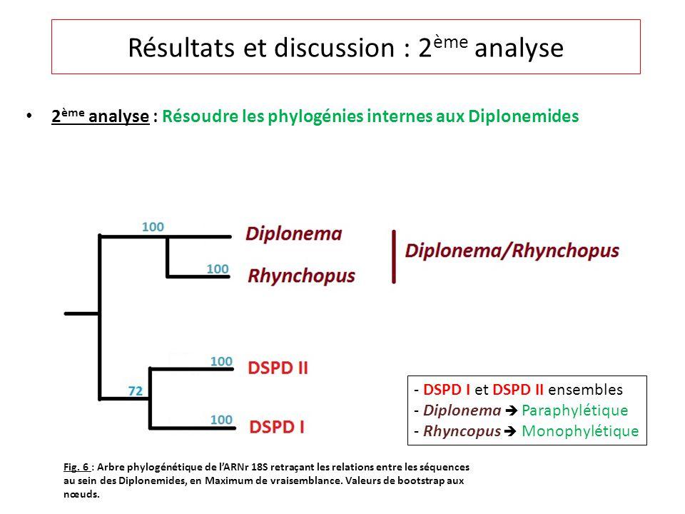 2 ème analyse : Résoudre les phylogénies internes aux Diplonemides Résultats et discussion : 2 ème analyse - DSPD I et DSPD II ensembles - Diplonema Paraphylétique - Rhyncopus Monophylétique Fig.