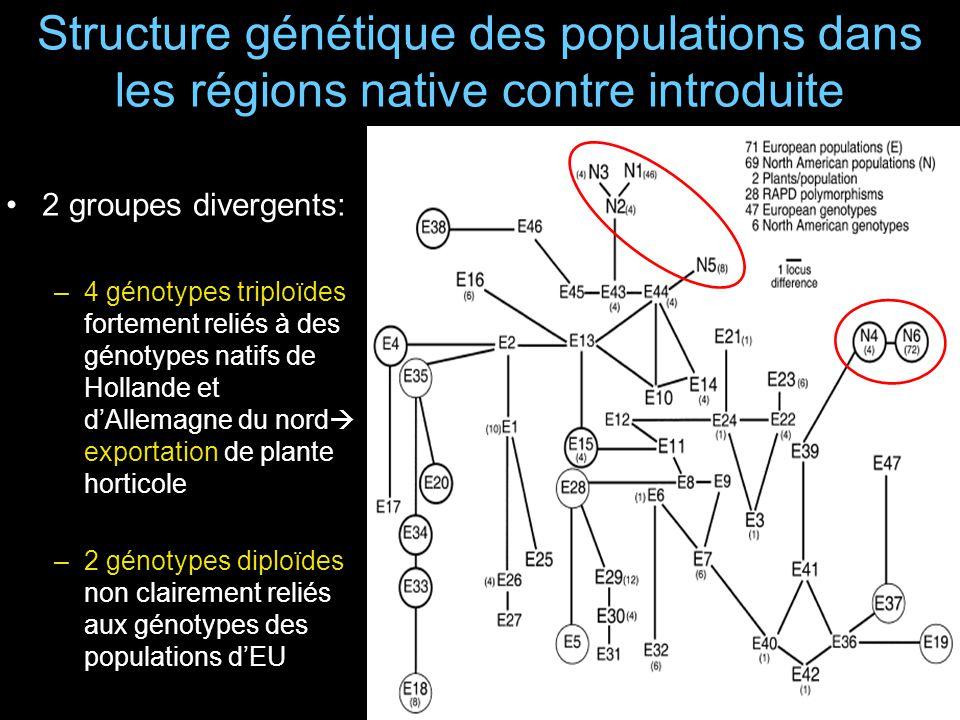 Structure génétique des populations dans les régions native contre introduite 2 groupes divergents: –4 génotypes triploïdes fortement reliés à des génotypes natifs de Hollande et dAllemagne du nord exportation de plante horticole –2 génotypes diploïdes non clairement reliés aux génotypes des populations dEU