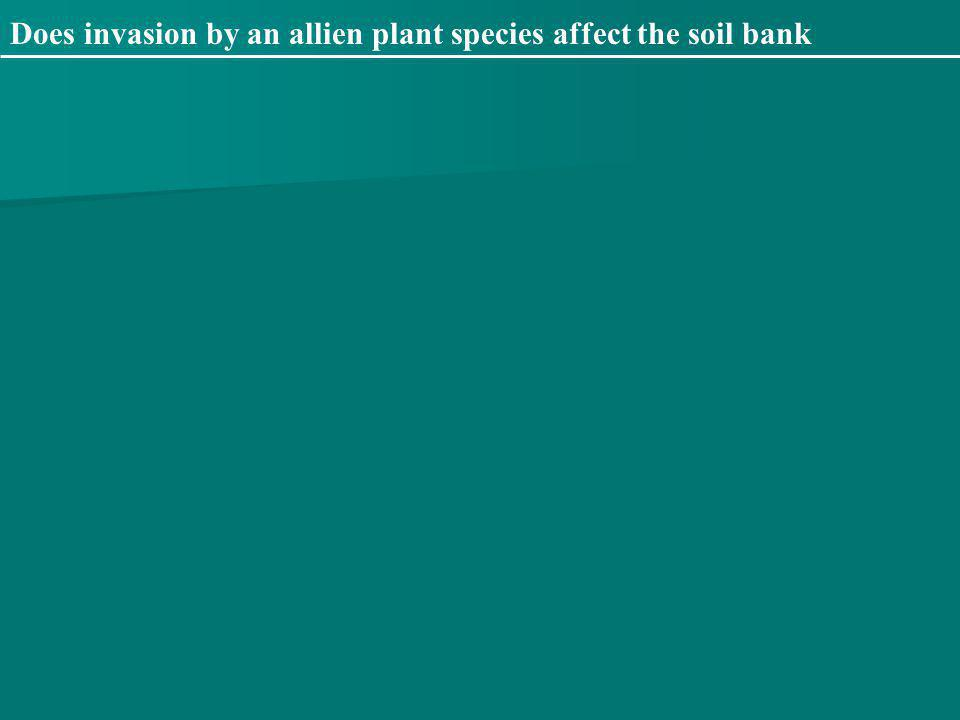 Does invasion by an allien plant species affect the soil bank