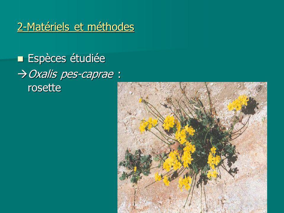 2-Matériels et méthodes Espèces étudiée Espèces étudiée Oxalis pes-caprae : rosette Oxalis pes-caprae : rosette