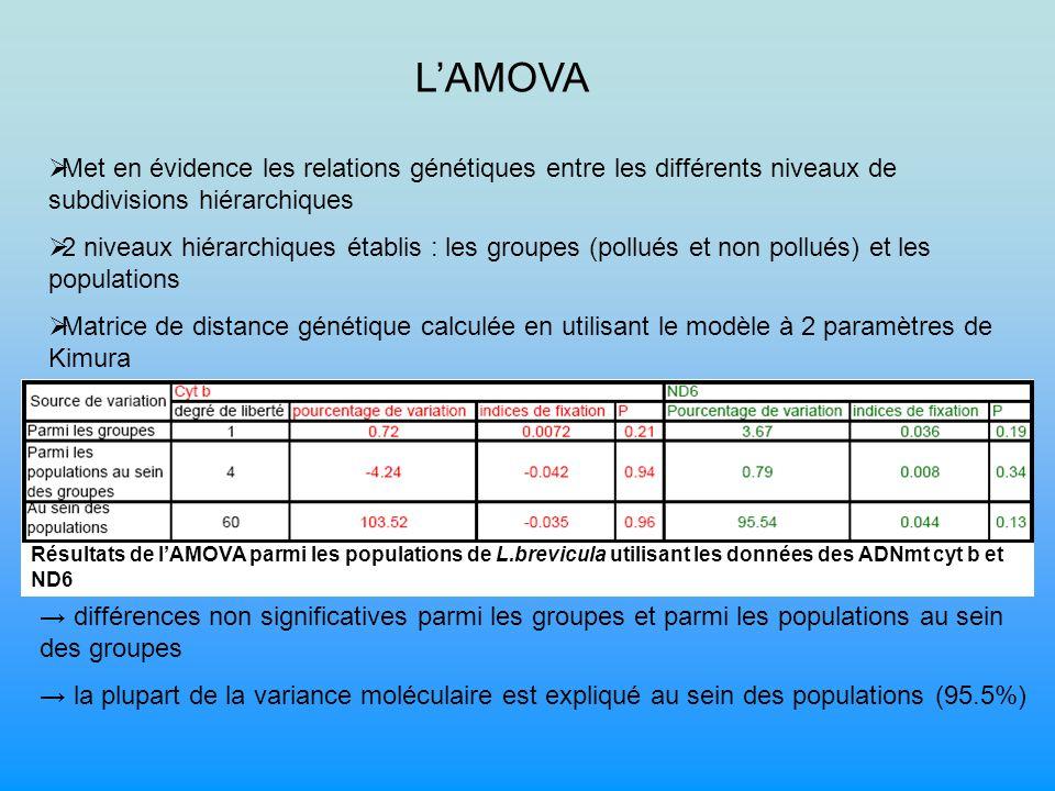 LAMOVA Met en évidence les relations génétiques entre les différents niveaux de subdivisions hiérarchiques 2 niveaux hiérarchiques établis : les groupes (pollués et non pollués) et les populations Matrice de distance génétique calculée en utilisant le modèle à 2 paramètres de Kimura Résultats de lAMOVA parmi les populations de L.brevicula utilisant les données des ADNmt cyt b et ND6 différences non significatives parmi les groupes et parmi les populations au sein des groupes la plupart de la variance moléculaire est expliqué au sein des populations (95.5%)