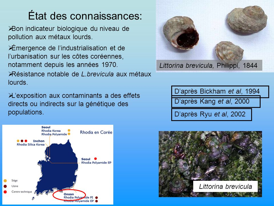 État des connaissances: Littorina brevicula, Philippi, 1844 Littorina brevicula Lexposition aux contaminants a des effets directs ou indirects sur la génétique des populations.