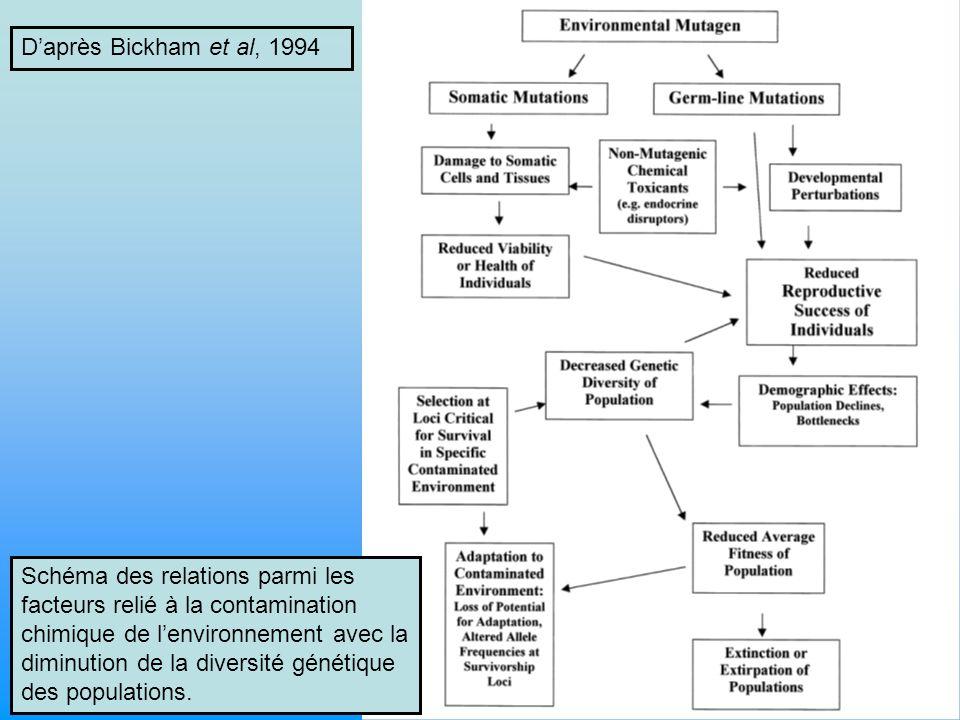 Schéma des relations parmi les facteurs relié à la contamination chimique de lenvironnement avec la diminution de la diversité génétique des populations.