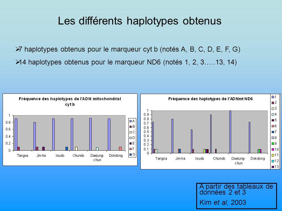 Les différents haplotypes obtenus 7 haplotypes obtenus pour le marqueur cyt b (notés A, B, C, D, E, F, G) 14 haplotypes obtenus pour le marqueur ND6 (notés 1, 2, 3…..13, 14) A partir des tableaux de données 2 et 3 Kim et al, 2003