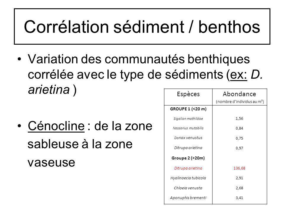 Corrélation sédiment / benthos Variation des communautés benthiques corrélée avec le type de sédiments (ex: D. arietina ) Cénocline : de la zone sable