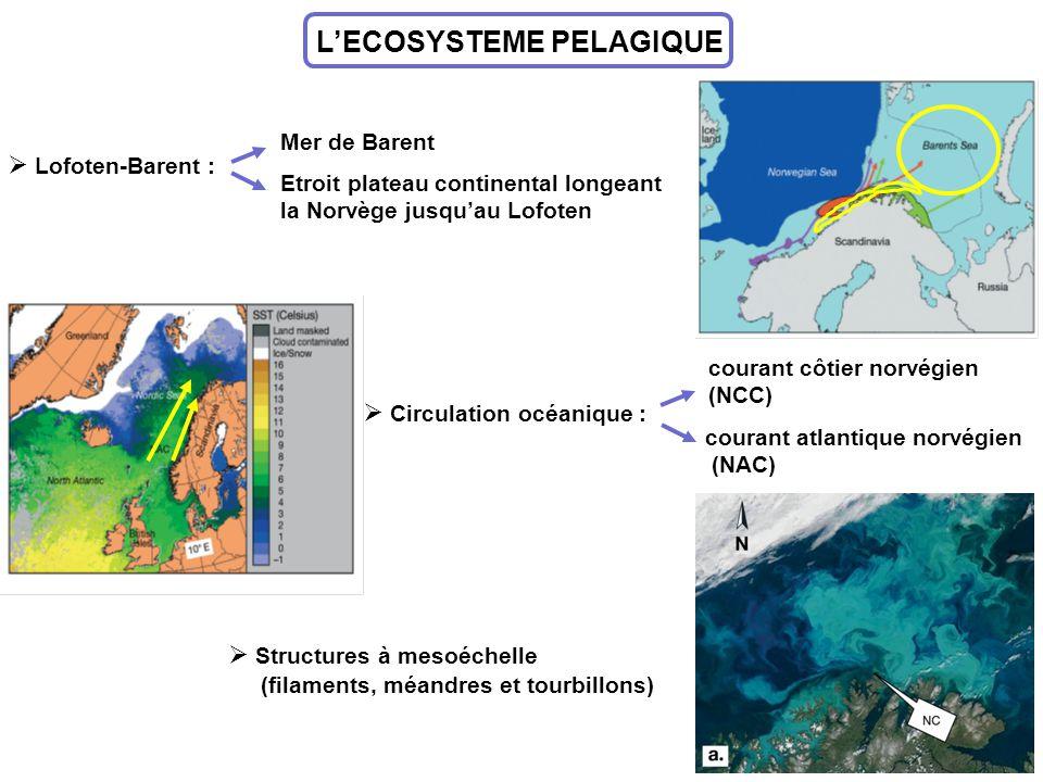 LECOSYSTEME PELAGIQUE Lofoten-Barent : Mer de Barent Etroit plateau continental longeant la Norvège jusquau Lofoten Circulation océanique : courant cô