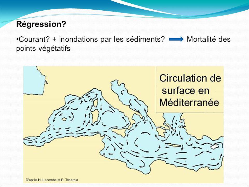 Régression Courant + inondations par les sédiments Mortalité des points végétatifs