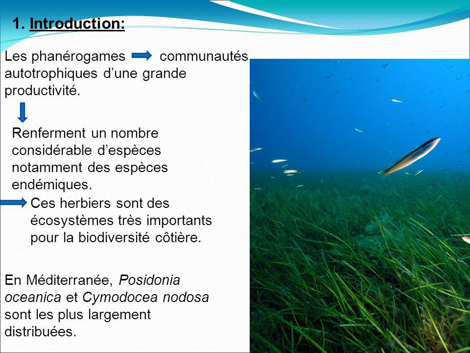 1.Introduction: Les phanérogames communautés autotrophiques dune grande productivité.