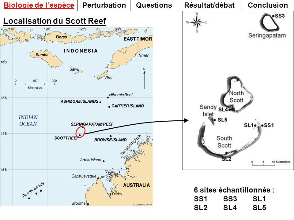 Localisation du Scott Reef 6 sites échantillonnés : SS1SS3SL1 SL2SL4SL5 Biologie de lespècePerturbationQuestionsRésultat/débatConclusion