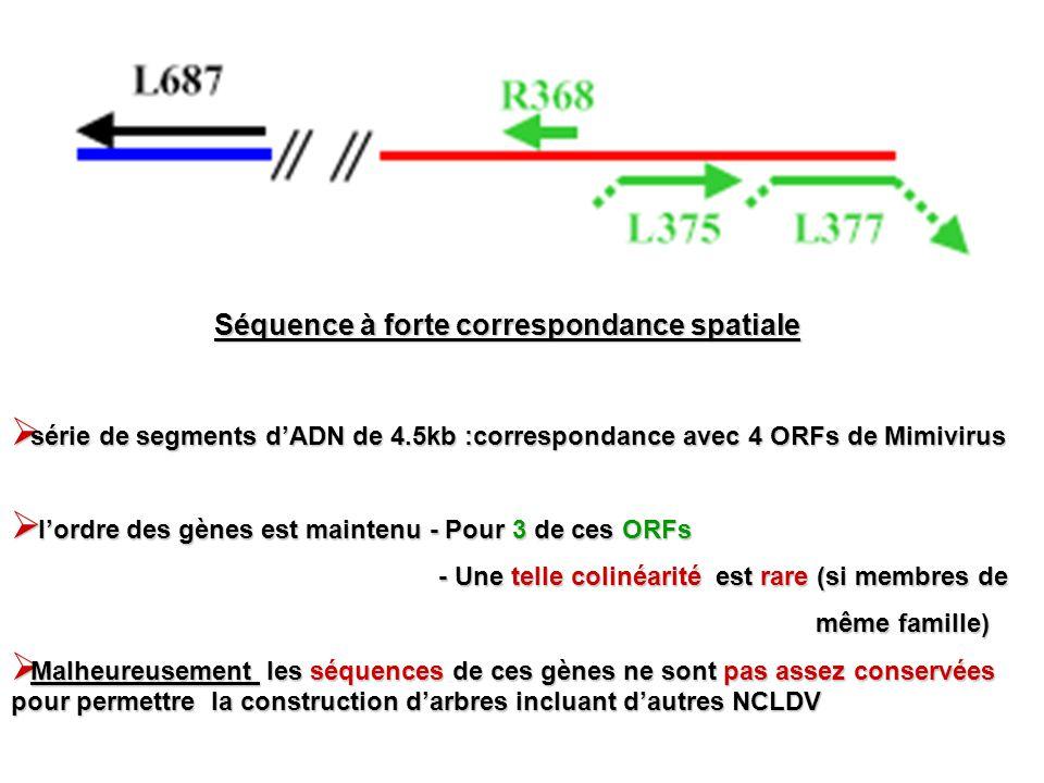 série de segments dADN de 4.5kb :correspondance avec 4 ORFs de Mimivirus série de segments dADN de 4.5kb :correspondance avec 4 ORFs de Mimivirus lord