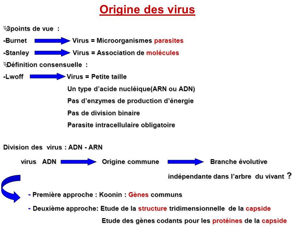 Origine des virus 3points de vue : 3points de vue : -Burnet Virus = Microorganismes parasites -Stanley Virus = Association de molécules Définition con