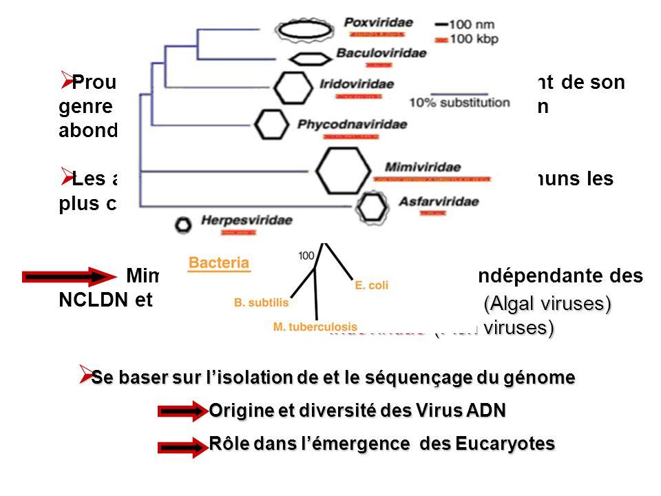 RESULTATS Comparaison: ORFs (Open reading frames: phases de lecture ouverte) Mimivirus / Echantillons en Mer des Sargasses (EMS) / Autres NCLDV 138/911 de correspondance EMS L analyse génétique de Mimivirus a révélé une variété de gènes codants pour des enzymes totalement inattendues Gènes codants pour le mécanisme de traduction dARN et de réparation dADN l interprétation des données à séquencer Etude organismes plus de probabilité dappartenance Virale Analyses des gènes NCLDV homologues de Mimivirus Plus dhomologies : virus / organismes cellulaires