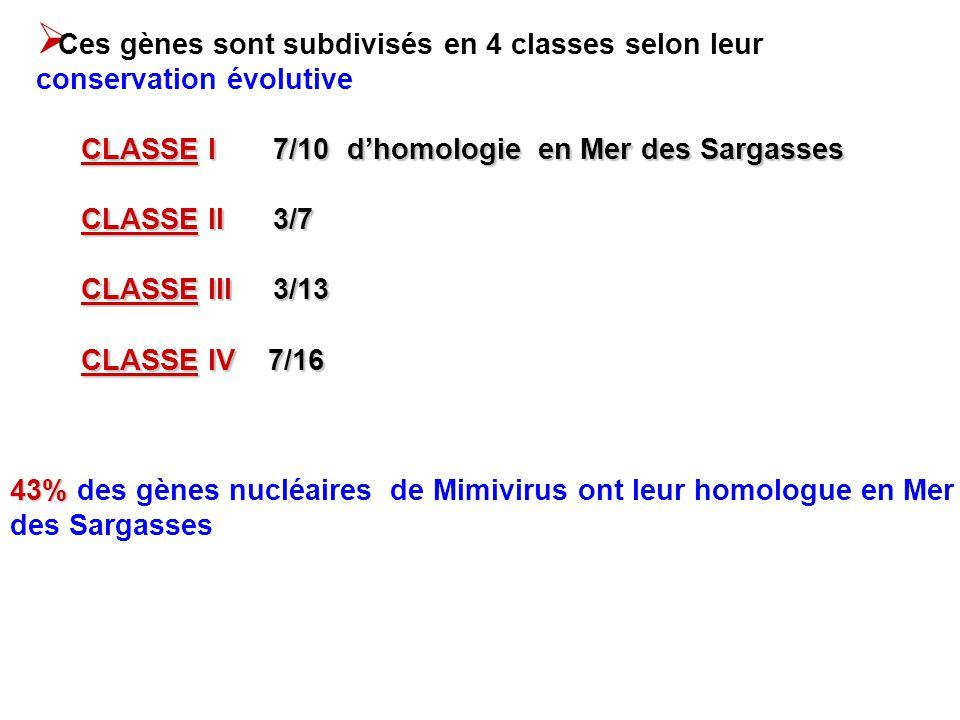 CLASSE I 7/10 dhomologie en Mer des Sargasses CLASSE II 3/7 CLASSE III 3/13 CLASSE IV7/16 CLASSE IV 7/16 43% 43% des gènes nucléaires de Mimivirus ont