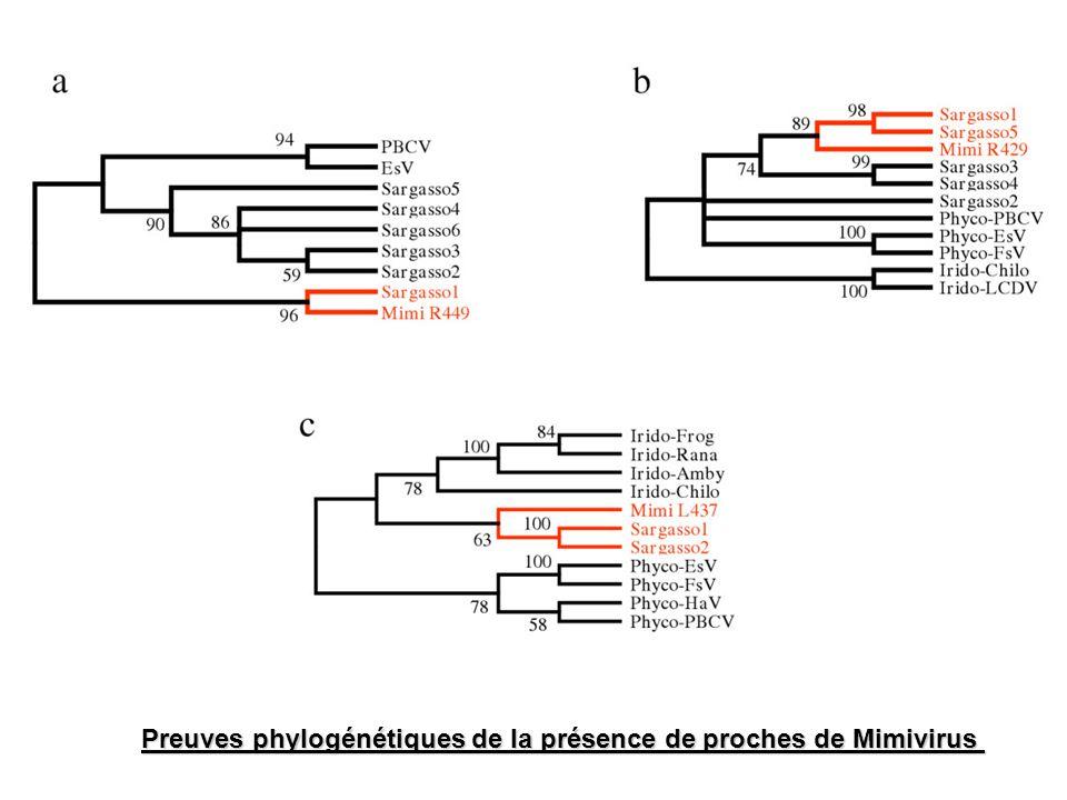 % correspondance Mimivirus ORFs 35% 28% Diagramme de correspondance (NJ) de R449 /EMS/NCLDV Arbre analytique de lORF R449