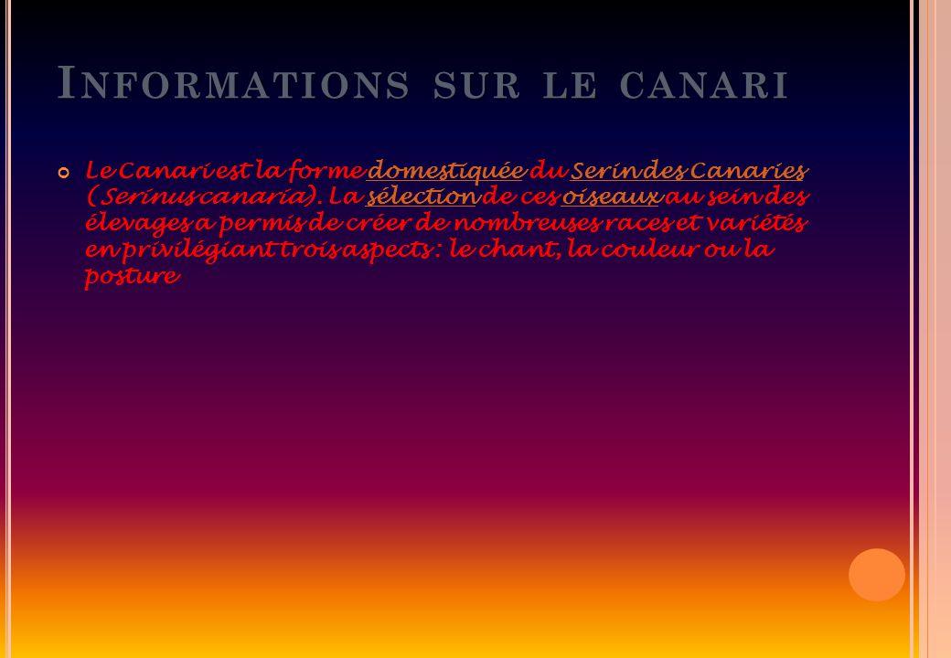 I NFORMATIONS SUR LE CANARI Le Canari est la forme domestiquée du Serin des Canaries (Serinus canaria). La sélection de ces oiseaux au sein des élevag