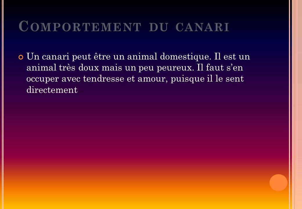 C OMPORTEMENT DU CANARI Un canari peut être un animal domestique. Il est un animal très doux mais un peu peureux. Il faut sen occuper avec tendresse e
