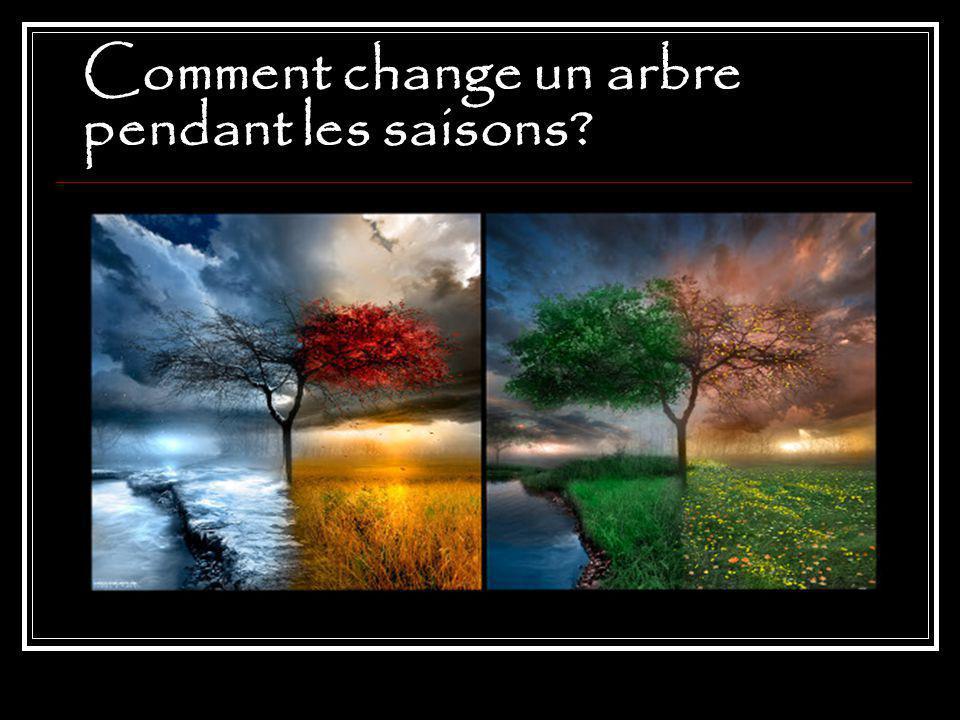 Comment change un arbre pendant les saisons?