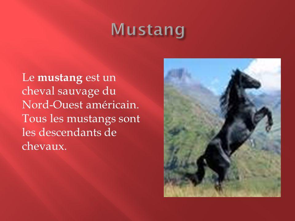 Le mustang est un cheval sauvage du Nord-Ouest américain. Tous les mustangs sont les descendants de chevaux.