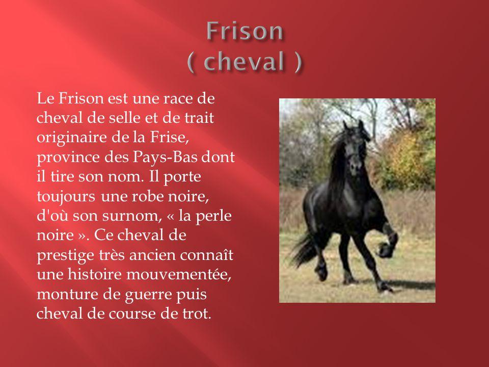 Le Frison est une race de cheval de selle et de trait originaire de la Frise, province des Pays-Bas dont il tire son nom. Il porte toujours une robe n