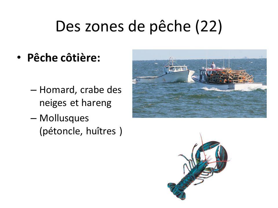 Des zones de pêche (22) Pêche côtière: – Homard, crabe des neiges et hareng – Mollusques (pétoncle, huîtres )